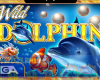 Wild Dolphin GameArt